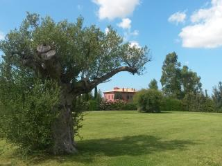 PELAGONE, Magliano in Toscana