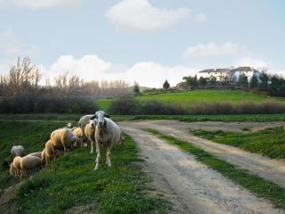 Cortijo Rural La Gineta