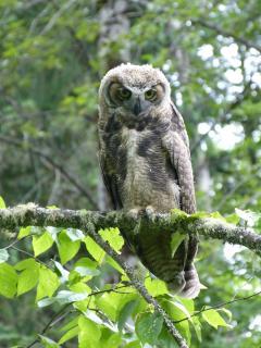 Owl family,morning visit.