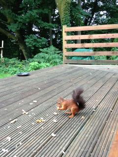Friend calling for breakfast