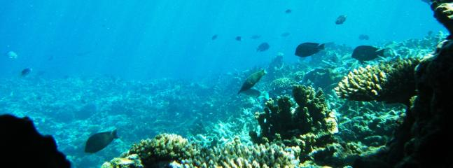 See for yourself this thriving reef directly in front of the Lodge.