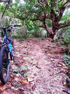 Near by mountain bike single track/jog/walk/photo oppertunities.