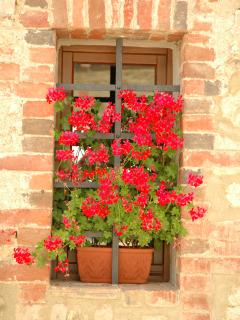 Spring time - so Italian !