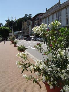 boulevard in front of the house