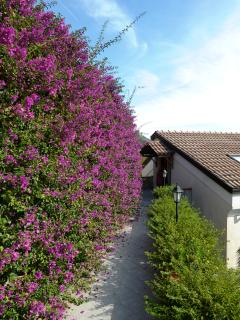 Bougainvillea lined path leading to Top floor entrance