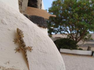 Kalindi Rural House with free Yoga in Lanzarote