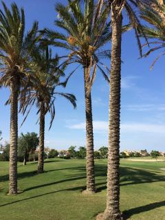 Palm trees on the 18 hole golf course