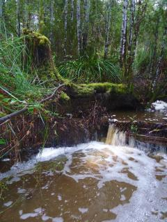 Sculthorpes Creek ( winter creek )