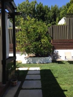 a partial view of the backyard