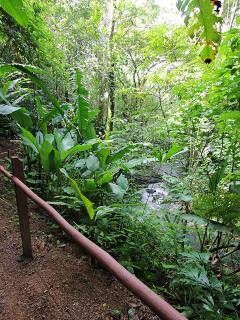 Private jungle trail