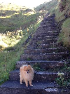 88 steps down to the cove (and next doors dog!)