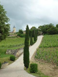 The drive upto a nearby Chateau in St. Emilion