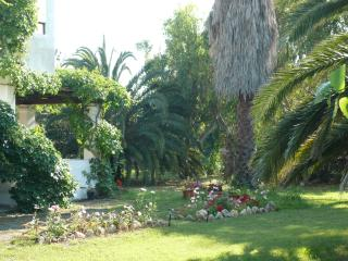 A view of the garden and the house
