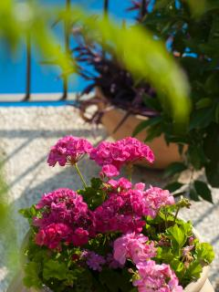 Flowers on the terrace overlooking the pool - another sunbathing area with seating