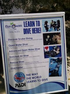 Learn to dive cheap