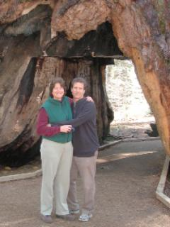 Big Trees with owners