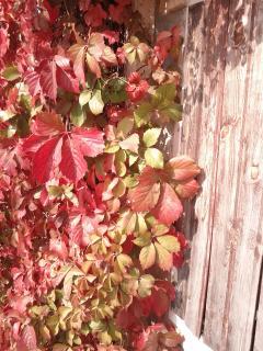 Fall colours !