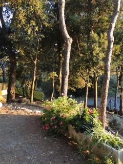 Una porzione del giardino
