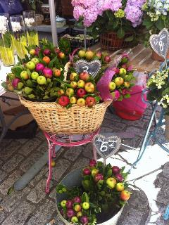 Apples at Bergerac Market