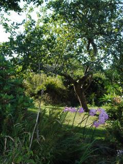 Garden at Heron