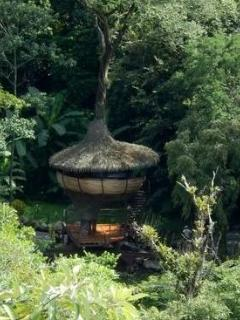 TREE HOUSE IN THE JUNGLE