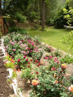 Historic Rose Garden of Specimen Roses