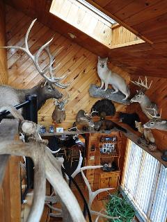 Mounts, elk, deer, wolf,bear, and lots of smaller animals