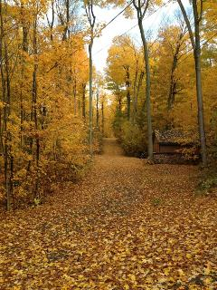 Beauatiful Fall Foilage