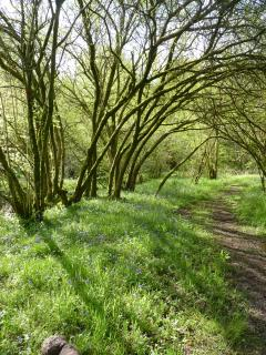The goat willow walk down in the valley.