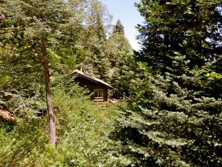 Nestled Inn - mountain cabin surrounded by trees
