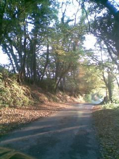 Sunny Autumn wander down our lane