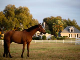 3 Bedroom Luxury Equestrian Farmhouse, Ocala