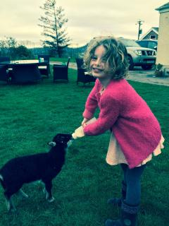 Feeding our orphan lamb Gwennie