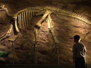 Dinasaure Discoveries