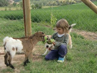 Pequeña granja con animales