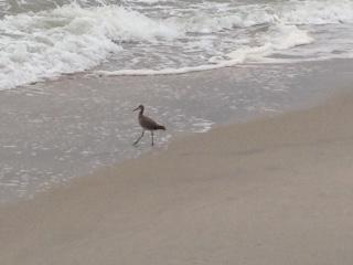 Sandpiper su Carolina Beach