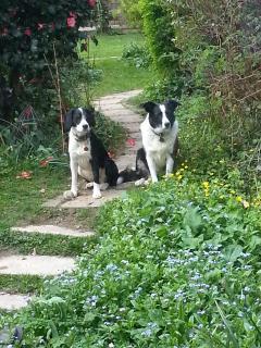 Their dogs, Josie & Jess