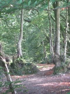 Nearby walks on the Blackdown Hills