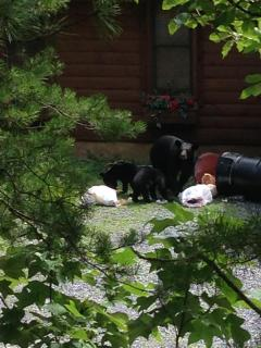 Unexpected visitors (Be sure &  Lock the Bear Proof Cans)