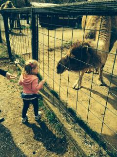 PETTING ZOOS FOR THE LITTLE ONES
