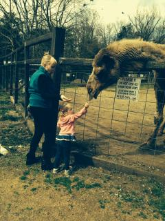 MORE THEN 1 PETTING ZOO