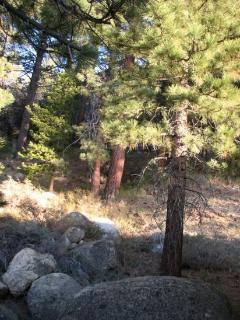 Step into the National Forest right from the backyard