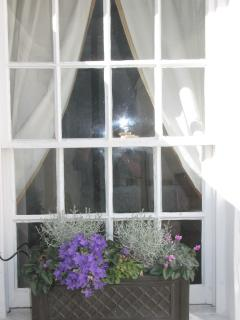 Rear courtyard window box