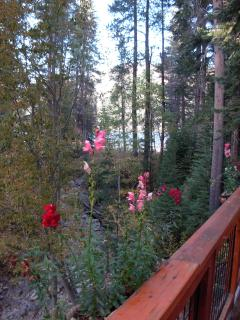Snap Dragons with Lake Background, Fall '14