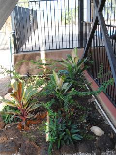 Gini's Garden