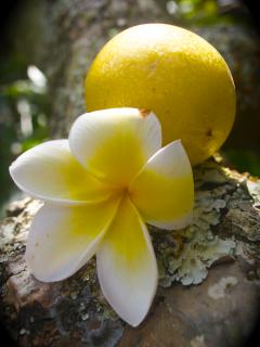 Organic fruit and Hawaiian flowers - a true tropical getaway!
