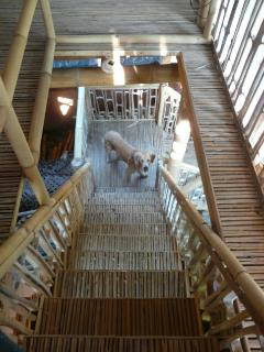 staircase up the tree house - dog not included!