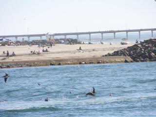 Mission Beach Pristine View Condo 1BR 1.5 BA, San Diego