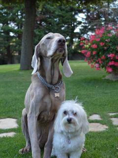 Ben & Daisy