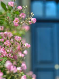Your entrance door in summer